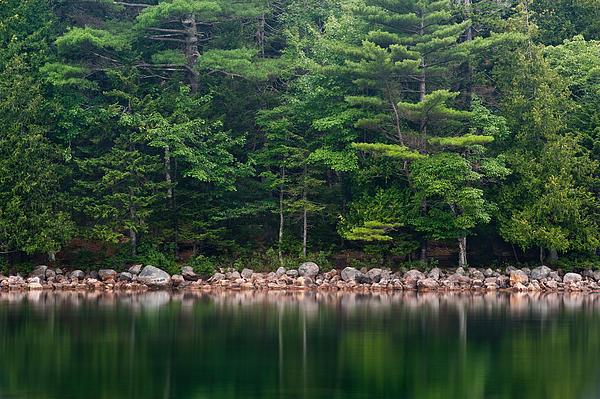Maine Photograph - Forest At Jordan Pond Acadia by Steve Gadomski