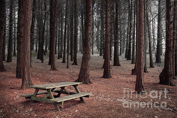 Autumn Photograph - Forest Table by Carlos Caetano