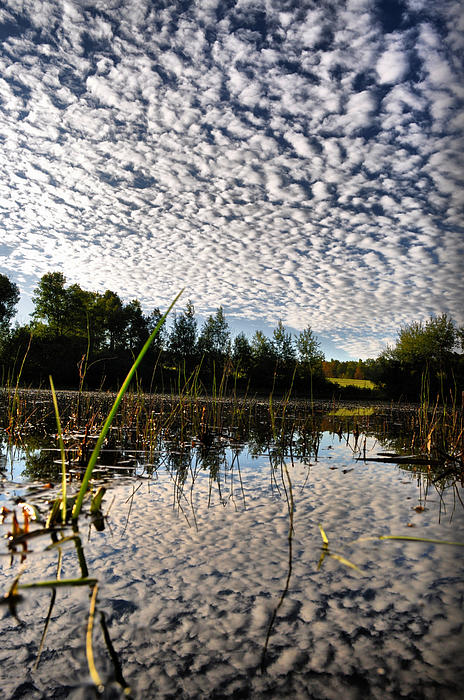 Water Scene Photograph - From The Water Up by Emily Stauring