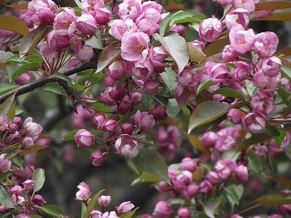 Flower Photograph - Full Blossom by Erika Betts