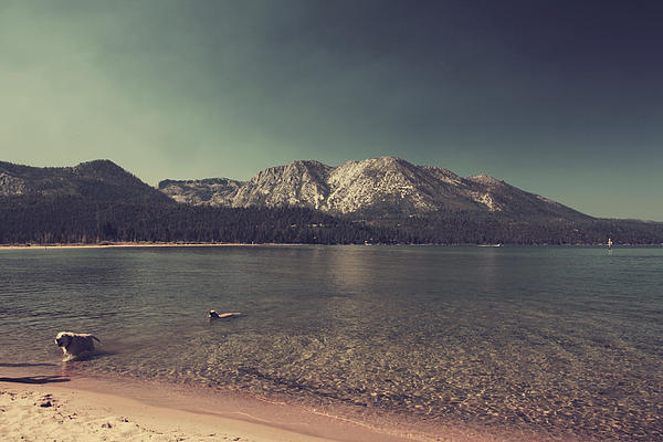 Lake Tahoe Photograph - Fun At The Lake by Laurie Search