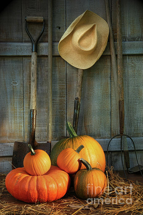 Agriculture Photograph - Garden Tools In Shed With Pumpkins by Sandra Cunningham