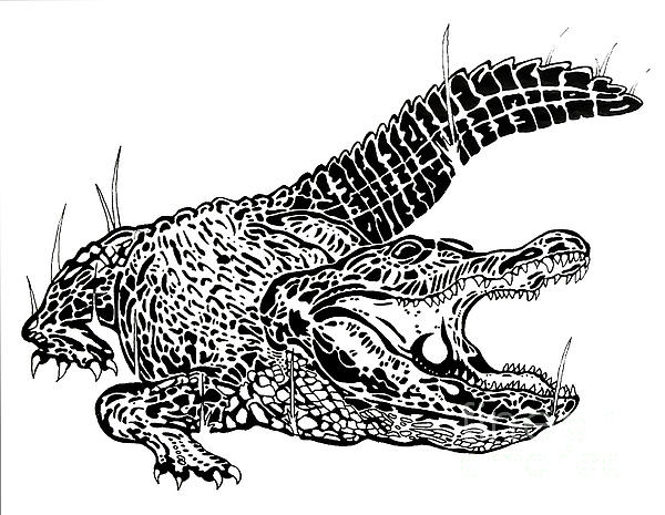 Works Drawing - Gator Feed by Jack Norton