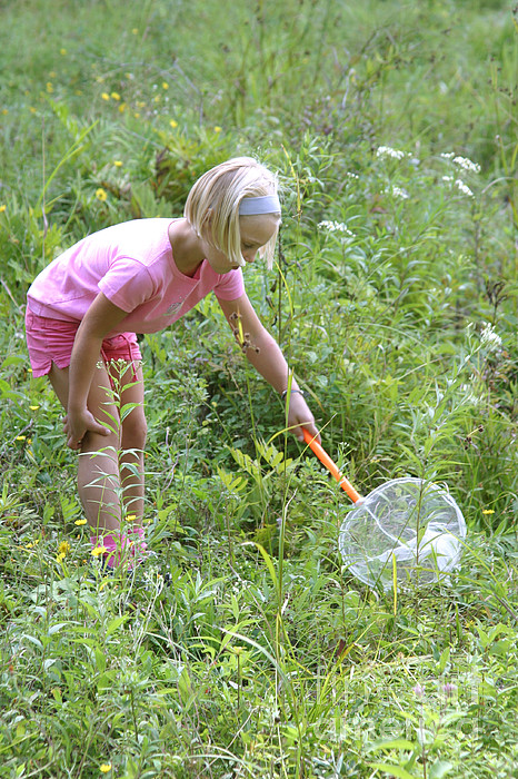 Science Photograph - Girl Collects Insects In A Meadow by Ted Kinsman