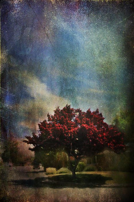 Tree Photograph - Glory by Laurie Search