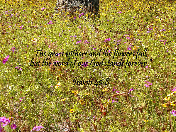 Scripture Photograph - Gods Word Stands Forever by Sheri McLeroy