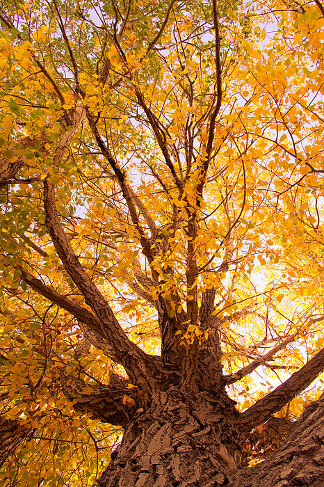 Autumn Photograph - Golden Autumn View by James BO  Insogna