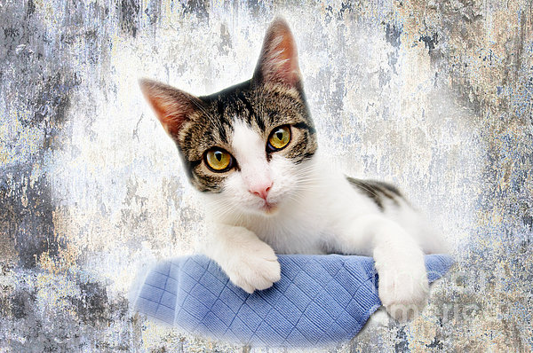 Fine Art Cat Photograph - Grand Kitty Cuteness 2 by Andee Design