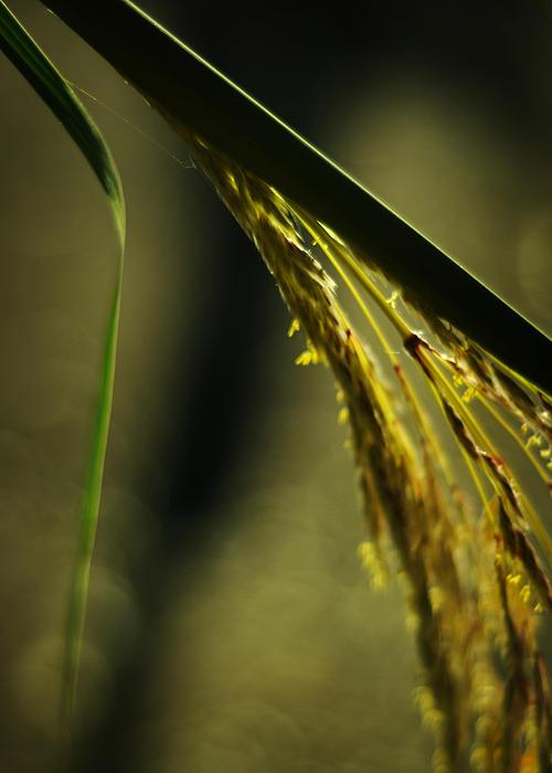 Contemporary Photograph - Grass Plume by Rebecca Sherman