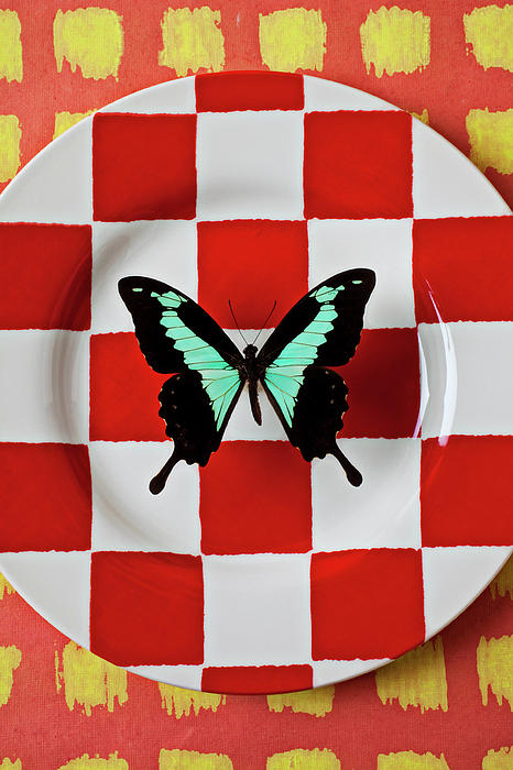 Butterfly Photograph - Green And Black Butterfly On Red Checker Plate by Garry Gay