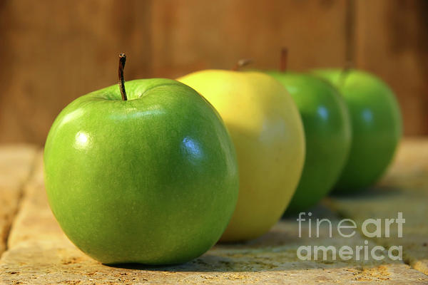 Apple Photograph - Green And Yellow Apples by Sandra Cunningham
