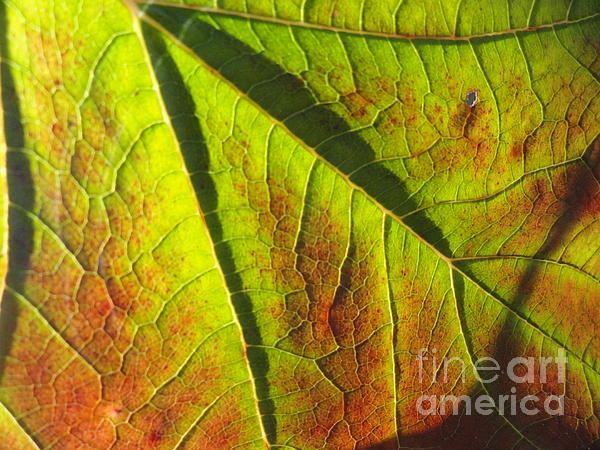 Leaves Photograph - Green Days Past by Trish Hale