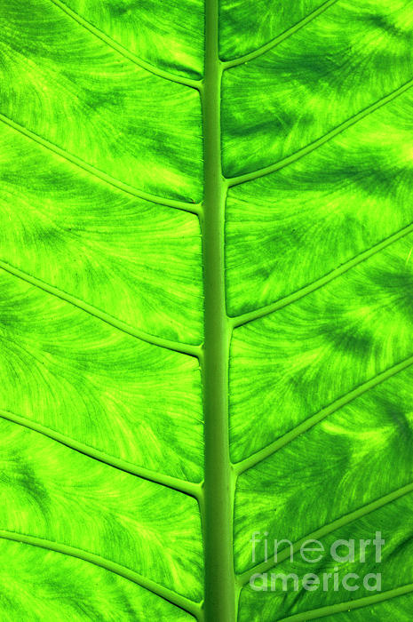 Nature Photograph - Green Leaf by Sami Sarkis