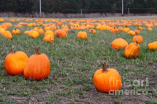 Pumpkin Photograph - Halloween Pumpkin Patch 7d8383 by Wingsdomain Art and Photography