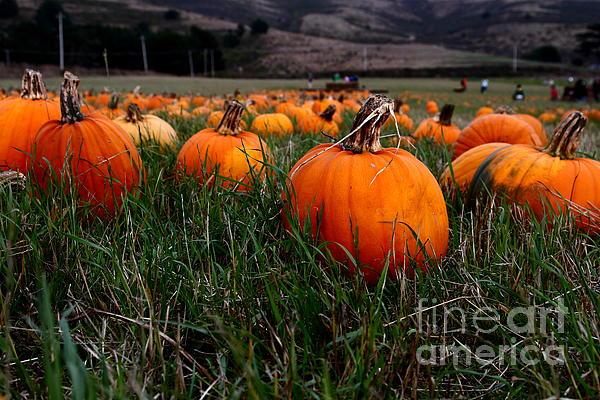 Pumpkin Photograph - Halloween Pumpkin Patch 7d8405 by Wingsdomain Art and Photography