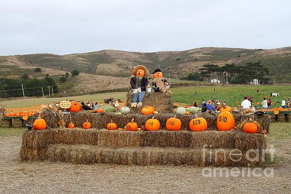 Pumpkin Photograph - Halloween Pumpkin Patch 7d8478 by Wingsdomain Art and Photography