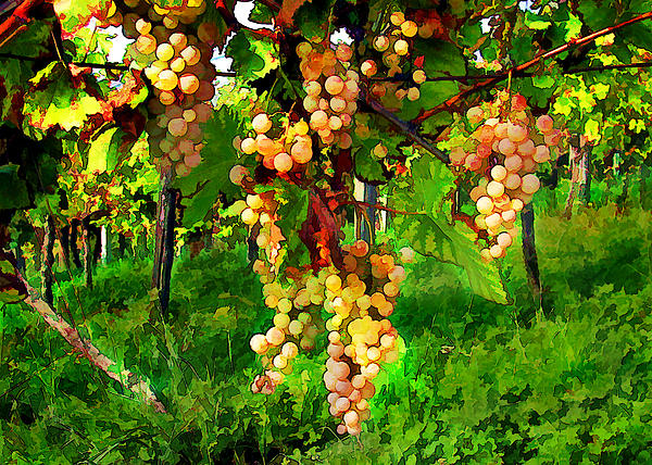 Wine Painting - Hanging Grapes On The Vine by Elaine Plesser