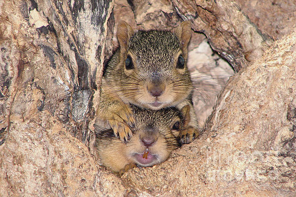 Squirrel Photograph - Hey I Cant See by Lori Tordsen
