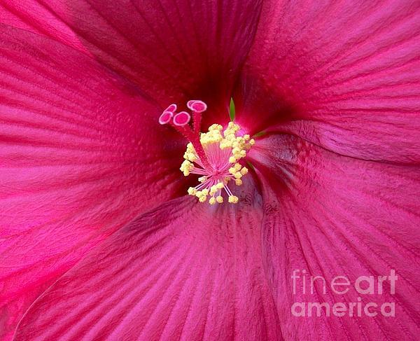 Photo Photograph - Hibiscus Close Up by Marsha Heiken