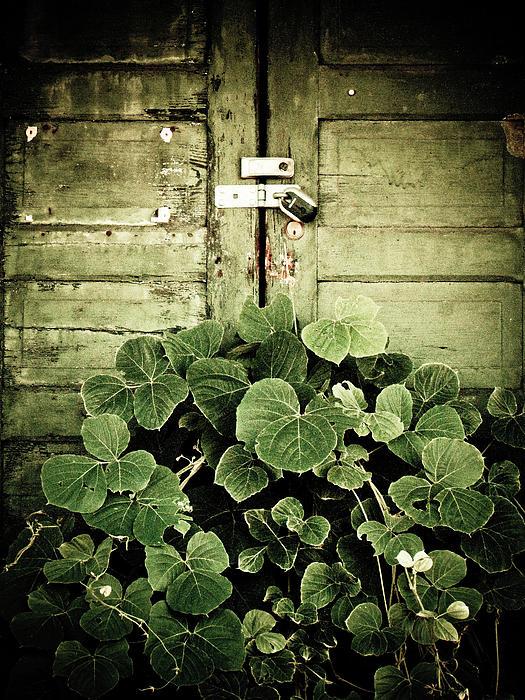Hidden Photograph - Hidden Nature by Jessica Brawley