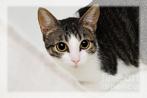 Cat Photograph - Hiding In The Bath Tub by Andee Design
