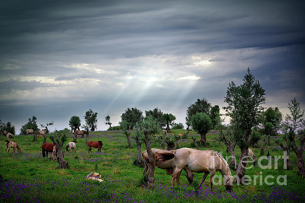 Agriculture Photograph - Horses Eating by Carlos Caetano