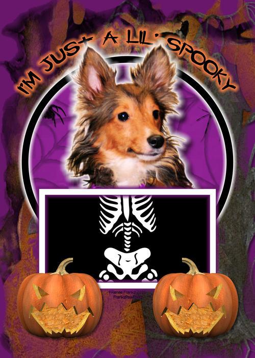 Sheltie Digital Art - Im Just A Lil Spooky Sheltie Puppy by Renae Laughner