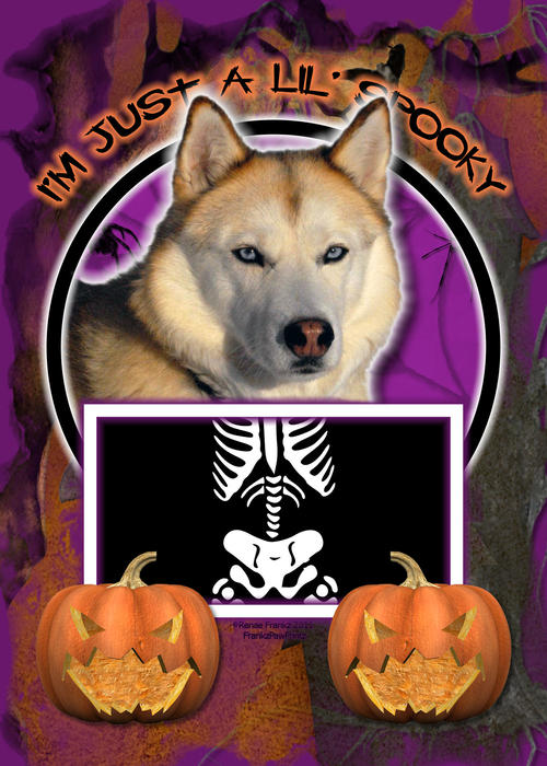 Siberian Husky Digital Art - Im Just A Lil Spooky Siberian Husky by Renae Laughner