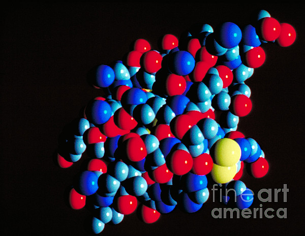 Biology Photograph - Insulin Molecule by Science Source