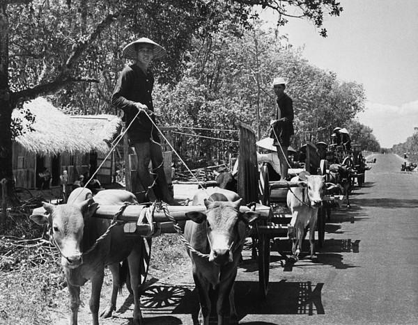 History Photograph - Internal South Vietnamese Refugees by Everett