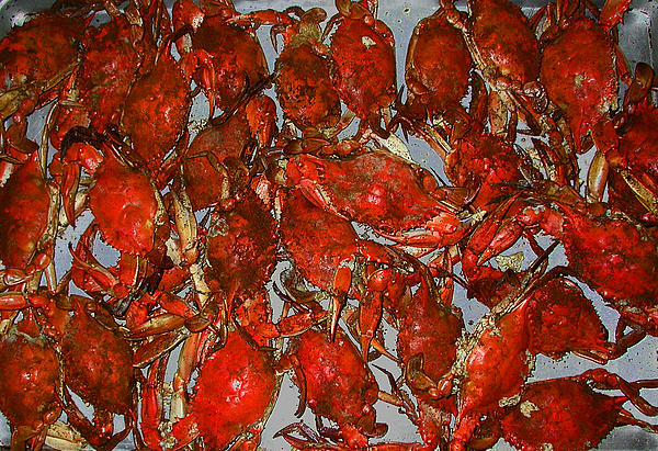 Crab Photograph - Just Crabs by Jim Ziemer