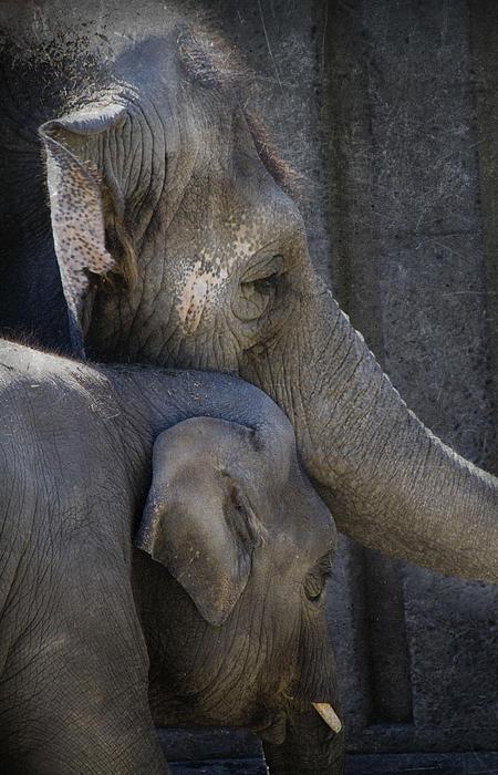 Elephants Photograph - Keep Me Close by Rebecca Cozart