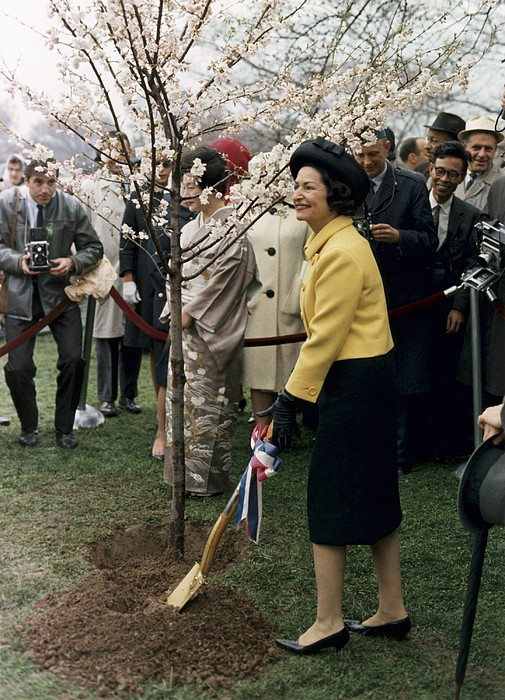 History Photograph - Lady Bird Johnson Planting A Tree by Everett