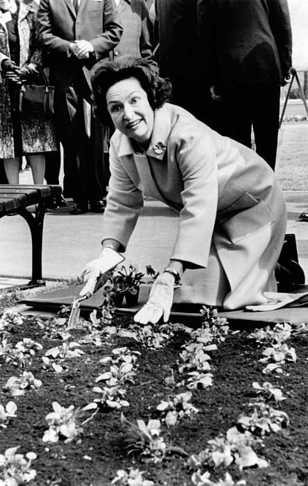 History Photograph - Lady Bird Johnson Planting Pansies by Everett
