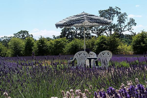 Landscape Photograph - Lavender Tea Time by Laurel Thomson