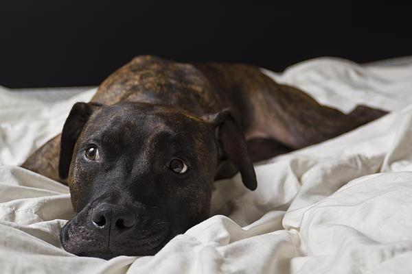 Dog Photograph - Lazy Days by Drew Castelhano