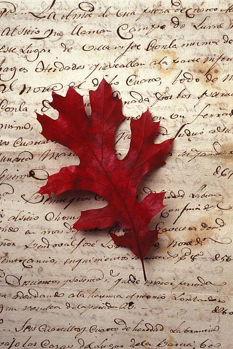 Leaf Photograph - Leaf On Letter by Garry Gay