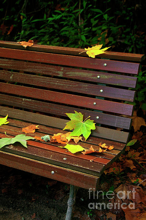 Autumn Photograph - Leafs In Bench by Carlos Caetano