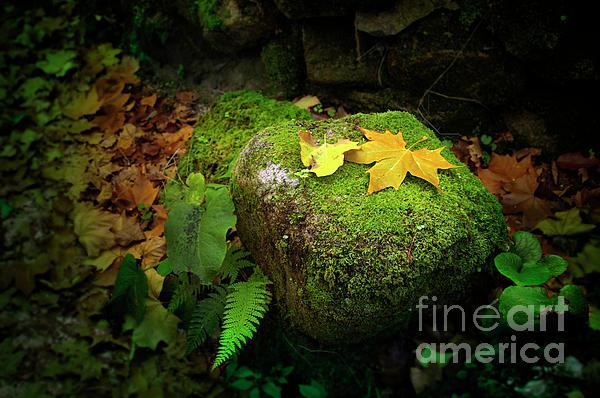 Autumn Photograph - Leafs On Rock by Carlos Caetano