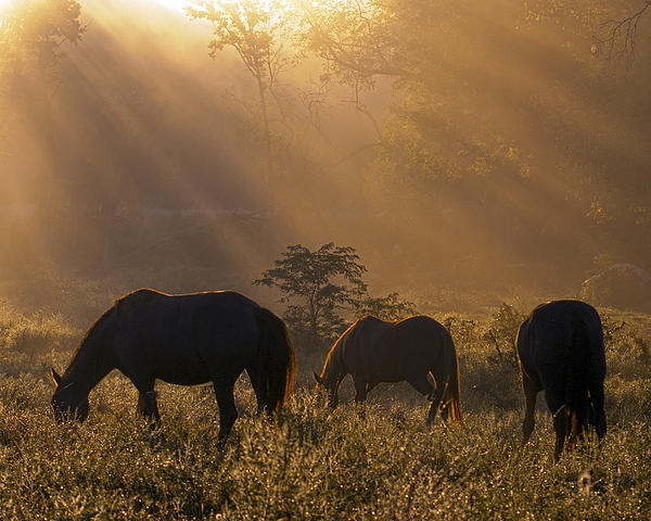 Horses Photograph - Let There Be Light by Ron  McGinnis