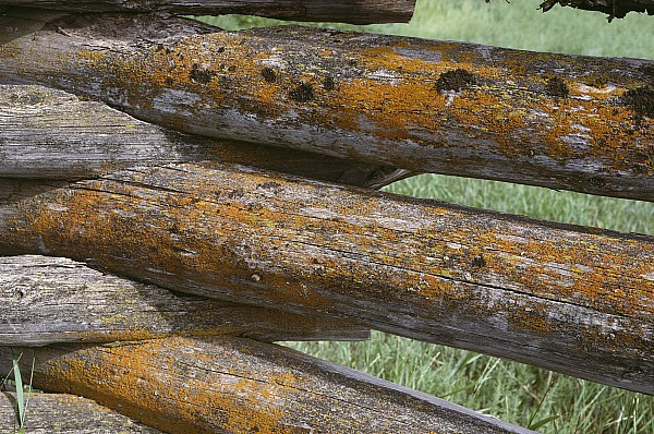 Outdoors Photograph - Lichens Growing On A Corral Fence by Stephen Sharnoff