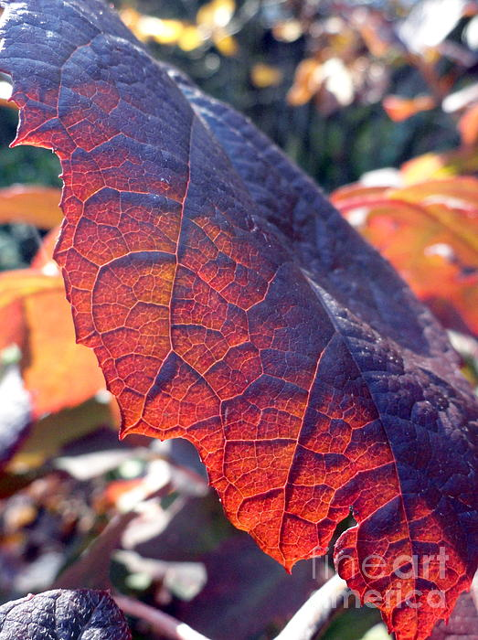 Leaves Photograph - Light Of The Lifeblood by Trish Hale