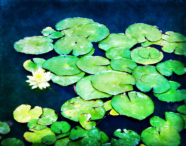Lilly Pad Photograph - Lily Pads And Lotus by Tammy Wetzel