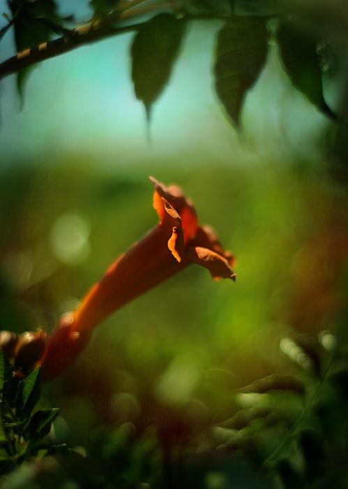 Orange Photograph - Love Flows Down by Rebecca Sherman