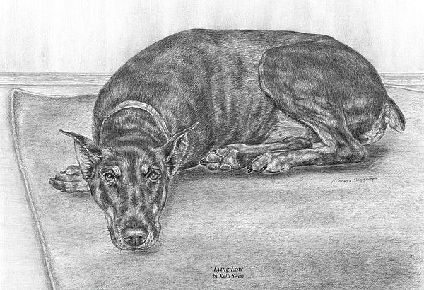 Doberman Drawing - Lying Low - Doberman Pinscher Dog Art Print by Kelli Swan