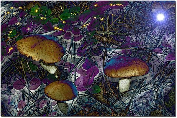 Photo Photograph - Magic Mushrooms by Barbara S Nickerson