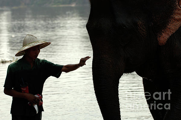 Silouette Photograph - Mahut With Elephant by Bob Christopher