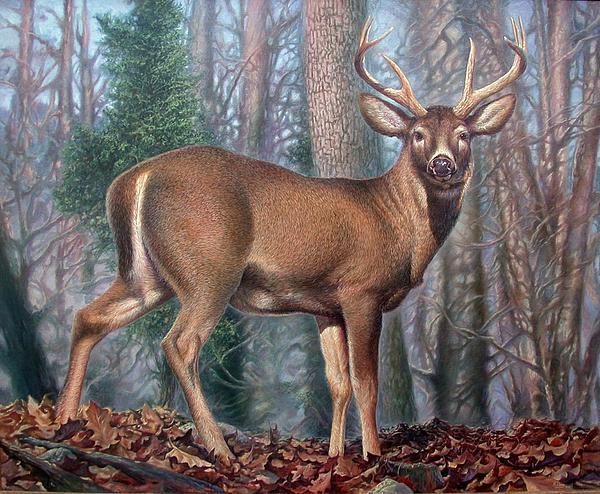 Deer Painting - Missouri Whitetail Deer by Hans Droog