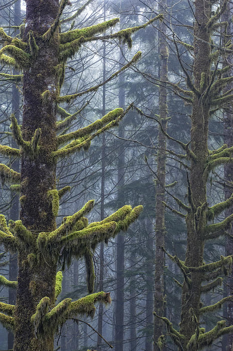 Forest Photograph - Misty Mystical Moss Forest by Paul W Sharpe Aka Wizard of Wonders