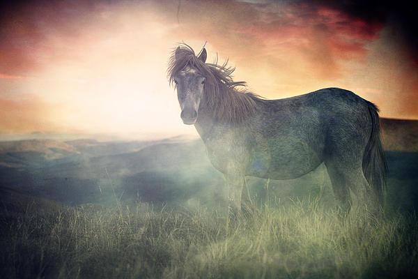Horse Digital Art - Misty Sunset by Lee-Anne Rafferty-Evans